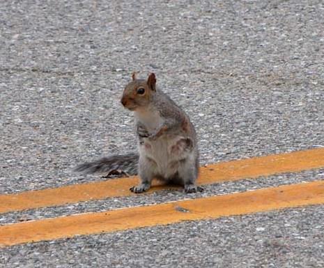 Squirrel (a poem)